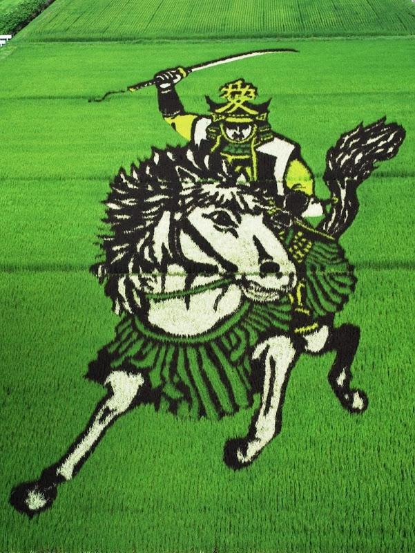 plantacao-de-arroz-vira-obra-de-arte-no-japao-samurai-blog-usenatureza