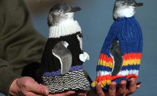 homem-tricota-blusas-para-ajudar-pinguins-blog-usenatureza