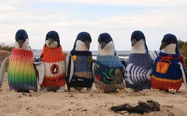 homem-tricota-blusas-para-pinguins-blog-usentureza
