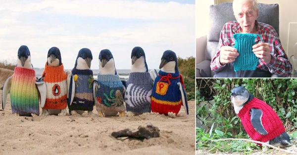 homem-tricota-para-pinguins-blog-usenatureza