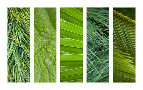 Natural textures and backgrounds on a collage