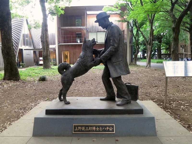 o-cachorro-leal-historia-blog-usenatureza