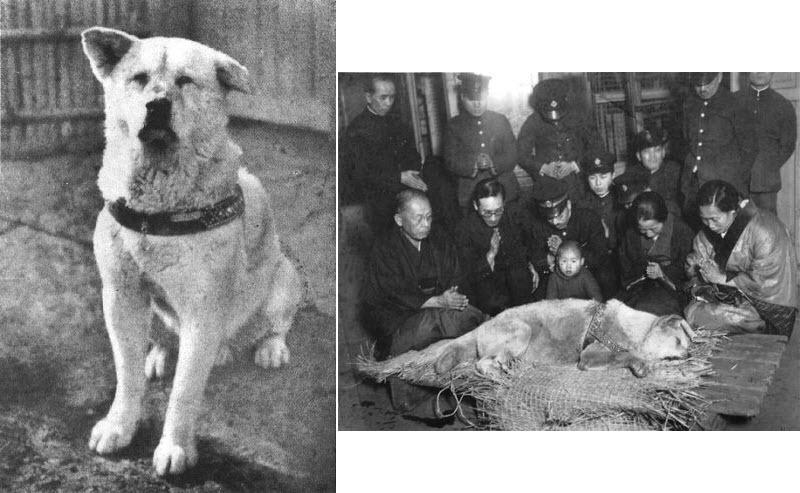 o-cachorro-mais-leal-da-historia-blog-usenatureza