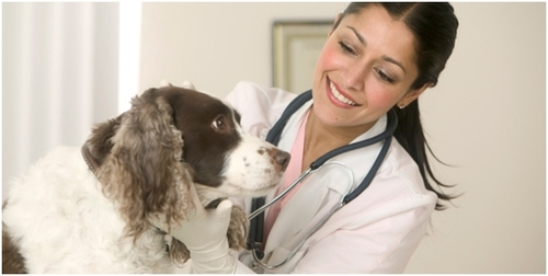 9-de-setembro-dia-do-medico-veterinario-blog-usenatureza