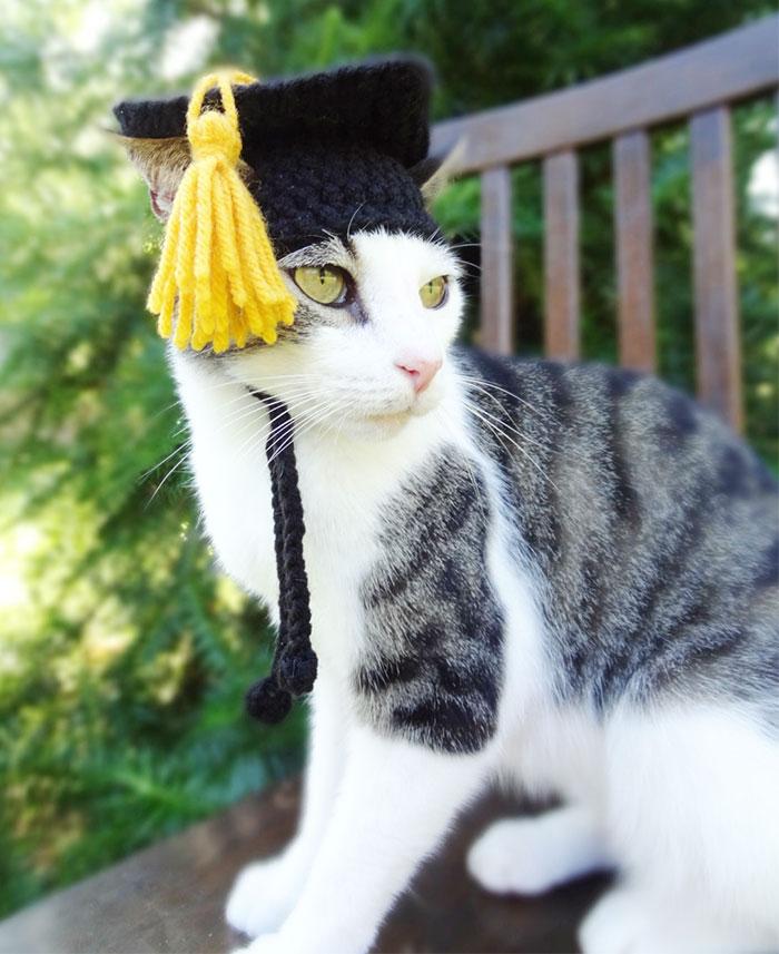 artista-faz-chapeus-de-crochet-para-bichinhos-formando-gato-blog-usenatureza