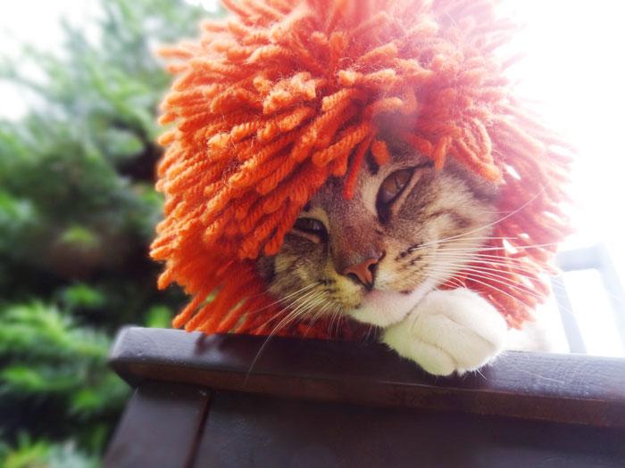 artista-faz-chapeus-de-crochet-para-bichinhos-gato-blog-usenatureza