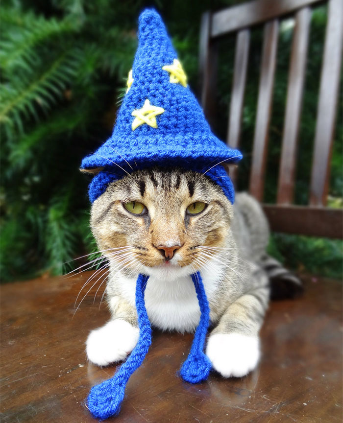 artista-faz-chapeus-de-crochet-para-bichinhos-gato-mago-blog-usenatureza