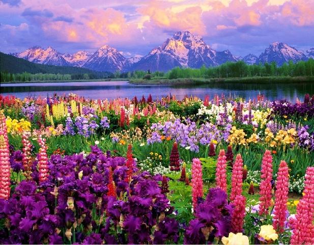 dia-da-natureza-4-de-outubro-sua-importancia-na-nossa-vida-blog-usenatureza
