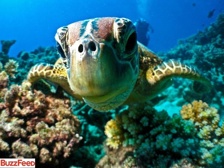 dia-da-natureza-4-de-outubro-sua-importancia-na-nossa-vida-tartaruga-blog-usenatureza