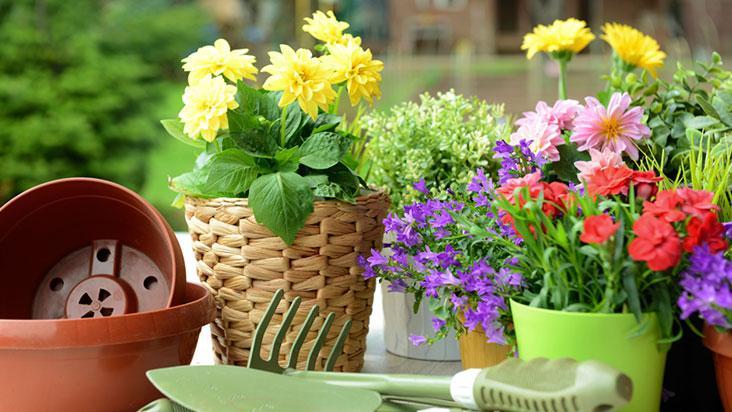 o-significado-das-flores-blog-usenatureza