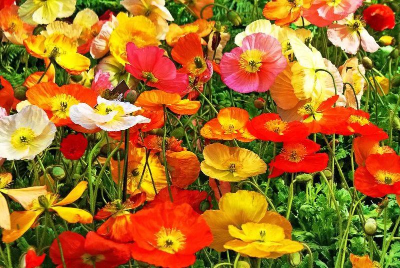 o-significado-flores-blog-usenatureza