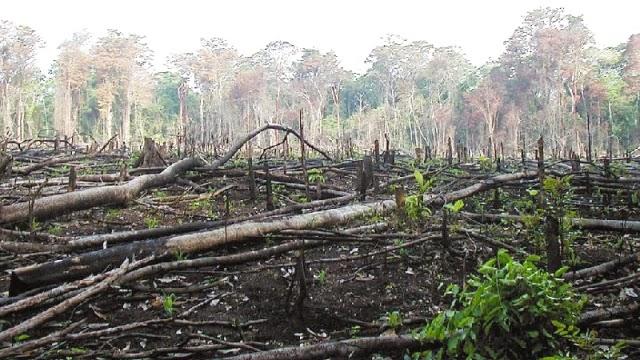 parque-desmatamento-cerrado-blog-usenatureza