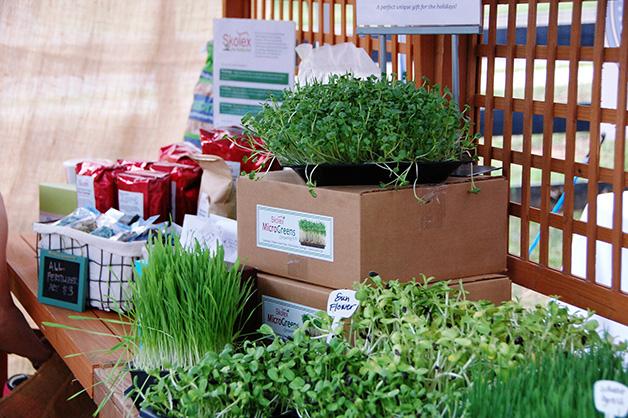super-vegetais-40-vezes-mais-nutritivos-blog-usenatureza