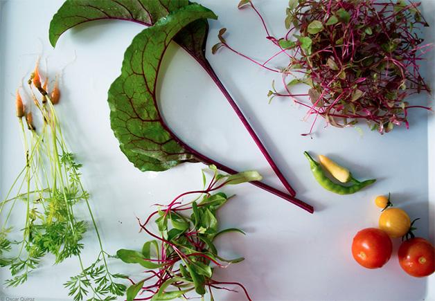 super-vegetais-40-vezes-maisnutritivos-blog-usenatureza