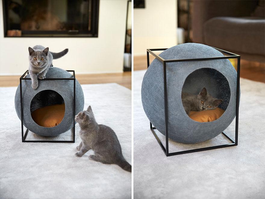 um-design-diferente-para-os-gatos-paris-blog-usenatureza