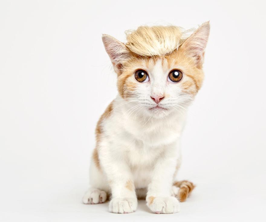atencao-os-gatos-precisam-de-abrigo-blog-usenatureza