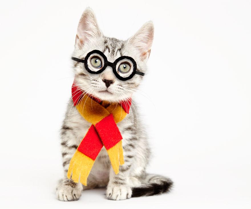 atencao-os-gatos-precisam-de-abrigo-harry-potter-blog-usenatureza