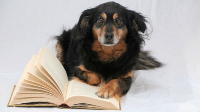 primeiros-cachorros-surgiram-asia-ha-15-000-anos-blog-usenatureza