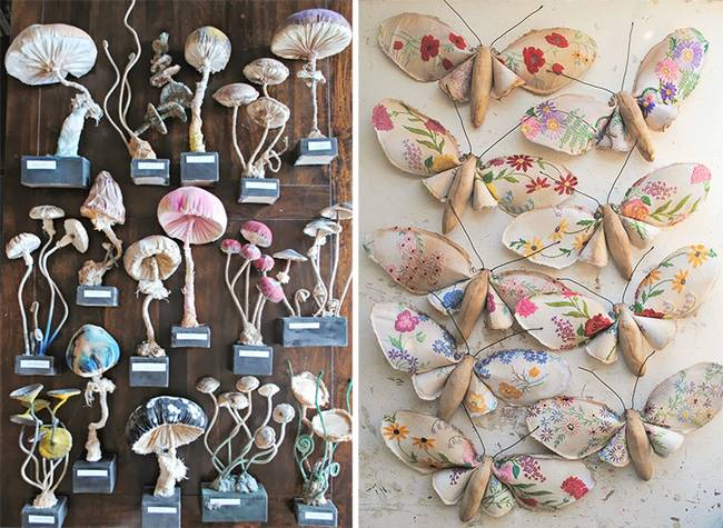 cogumelos-finch-borboletas