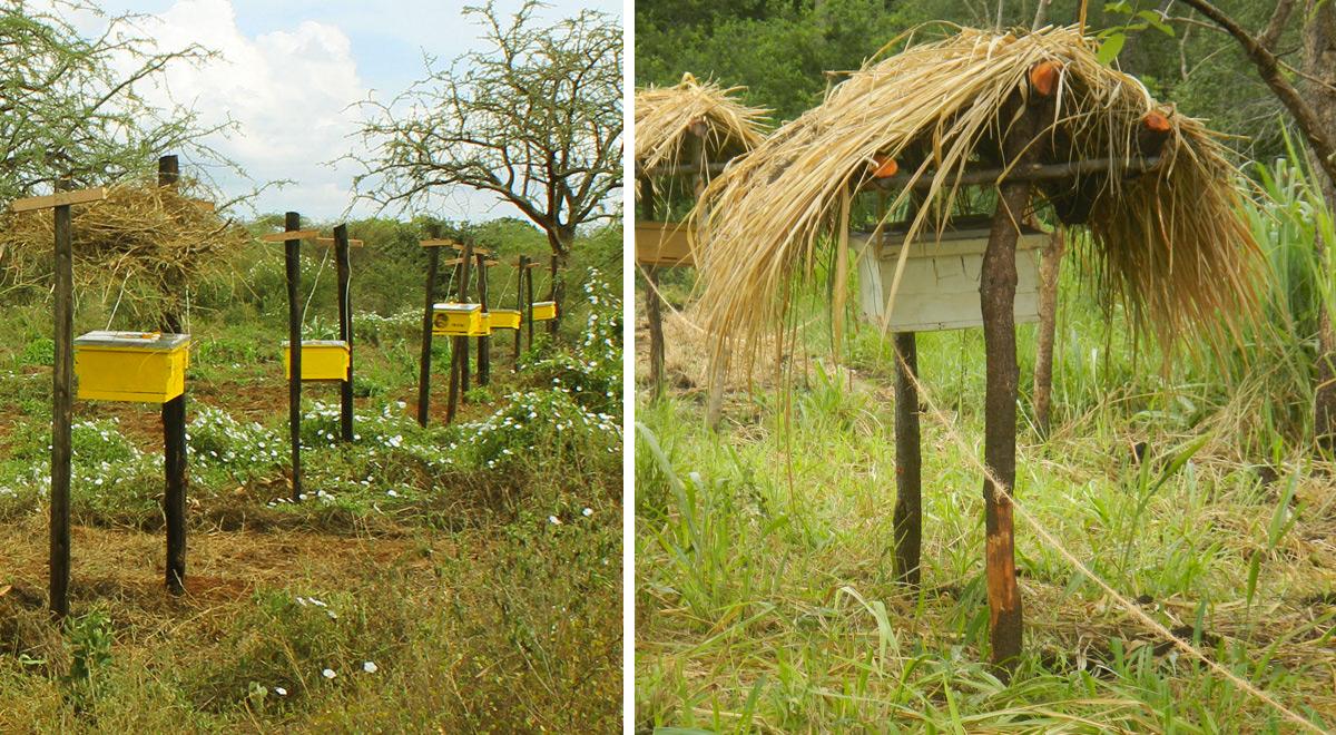 como-fazendeiros-da-africa-usam-da-natureza-para-preservar-suas-plantacoes-africa-blog-usenatureza