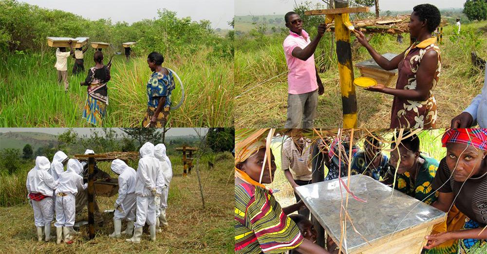 como-fazendeiros-da-africa-usam-da-natureza-para-preservar-suas-plantacoes-africa-mel-blog-usenatureza