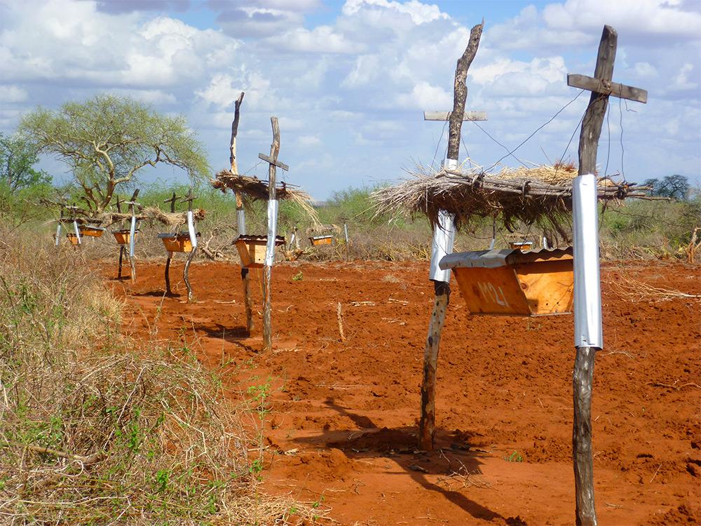COMO FAZENDEIROS DA ÁFRICA USAM DA NATUREZA PARA PRESERVAR SUAS PLANTAÇÕES