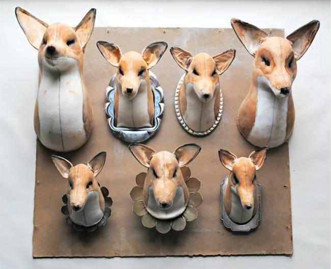 finch-raposas