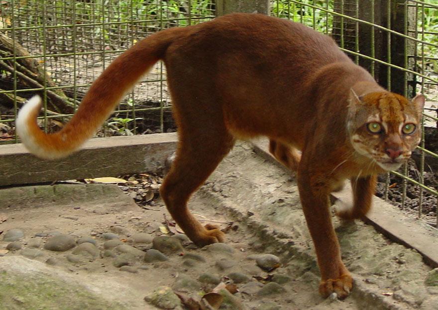 gato-bay-cat