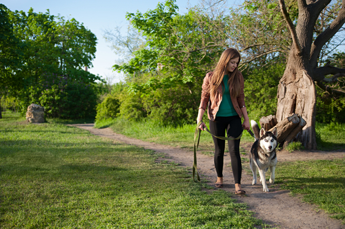 15-minutos-caminhada-cachorro-blog-usenatureza