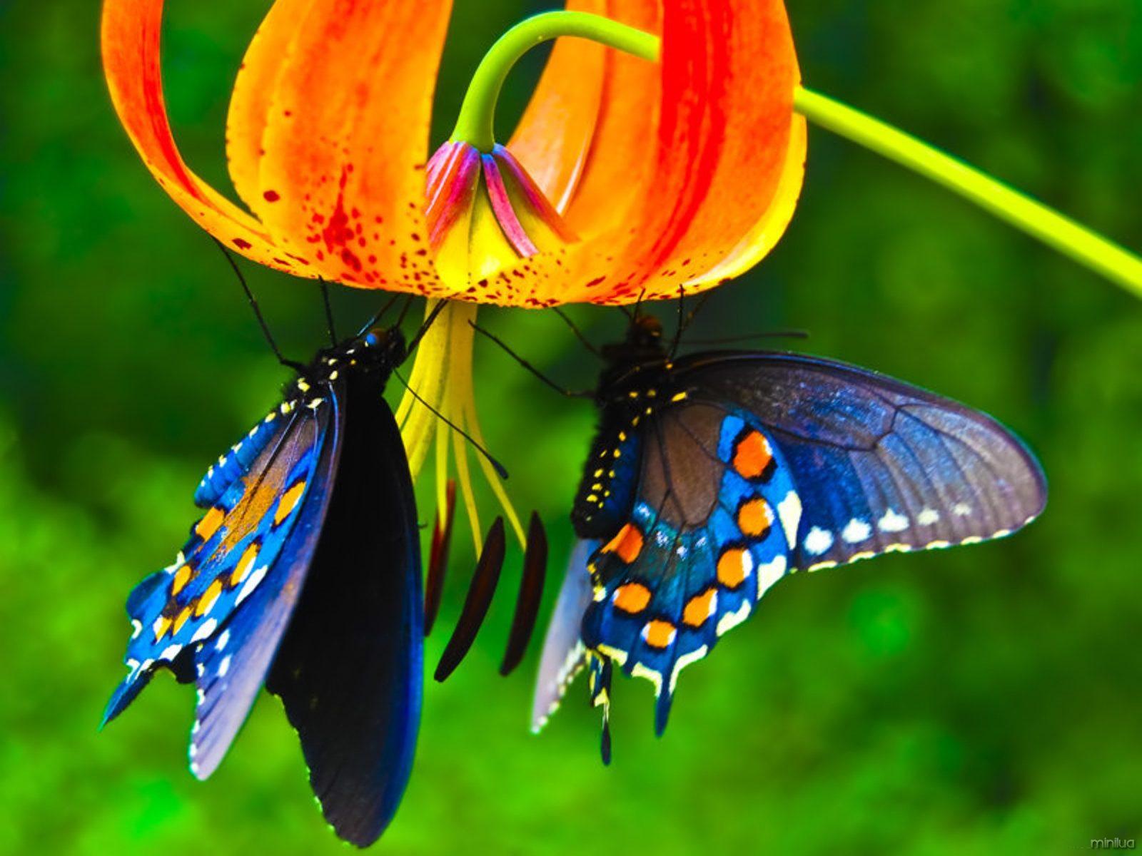 a-natureza-para-o-bem-estar-blog-usenatureza