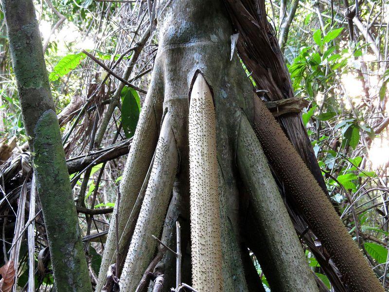 a-palmeira-que-anda-blog-usenatureza