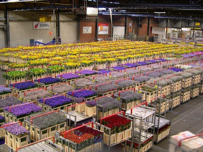 aalsmeer-flores-leilao-blog