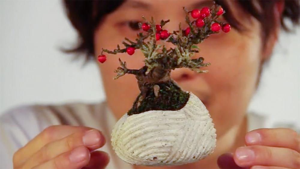 bonsai-ar-blog-usenatureza