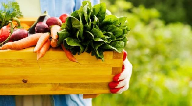 conheça-a-alimentação-viva-blog-usenatureza