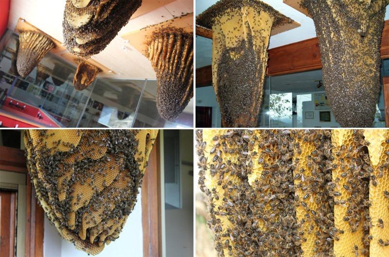 museu-de-abelhas-blog-usenatureza