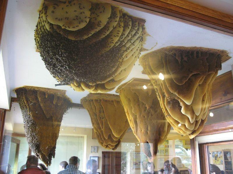 museu-de-abelhas-colmeias-espanha-blog-usenatureza