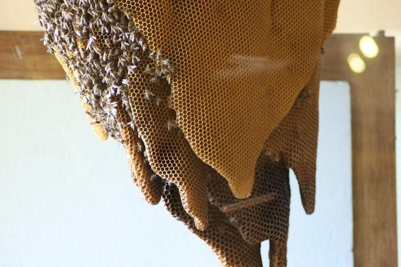 museu-de-abelhas-espanha-blog-usenatureza