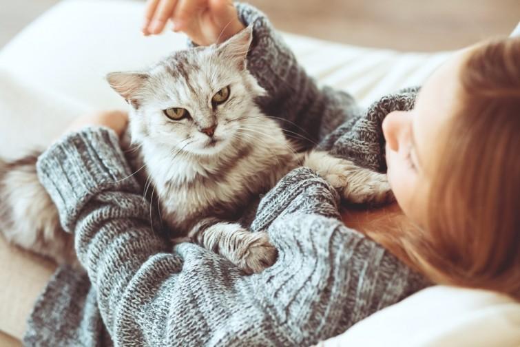 8-razoes-para-ter-gato-blog-usenatureza