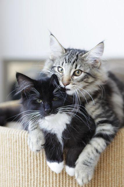 8-razoes-para-ter-gatos-blog-usenatureza
