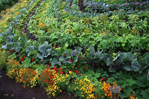 a-importancia-da-agrricultura-organica-blog-usenatureza