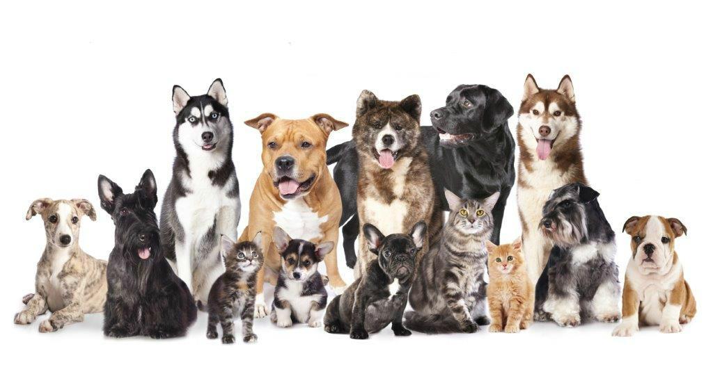 conheça-os-10-mandamentos-caninos
