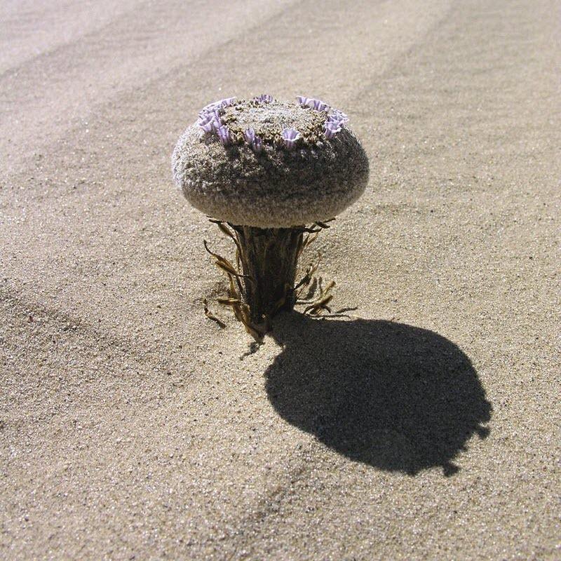 conheca-a-sandfood-que-nasce-no-deserto-blog-usenatureza