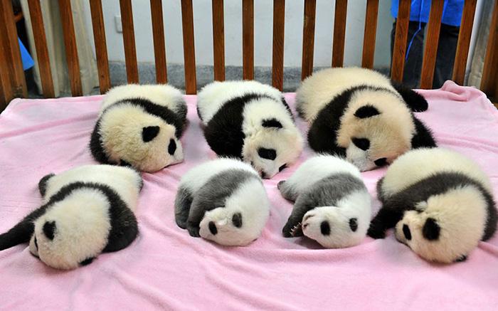 creche-para-pandas-blog-usenatureza