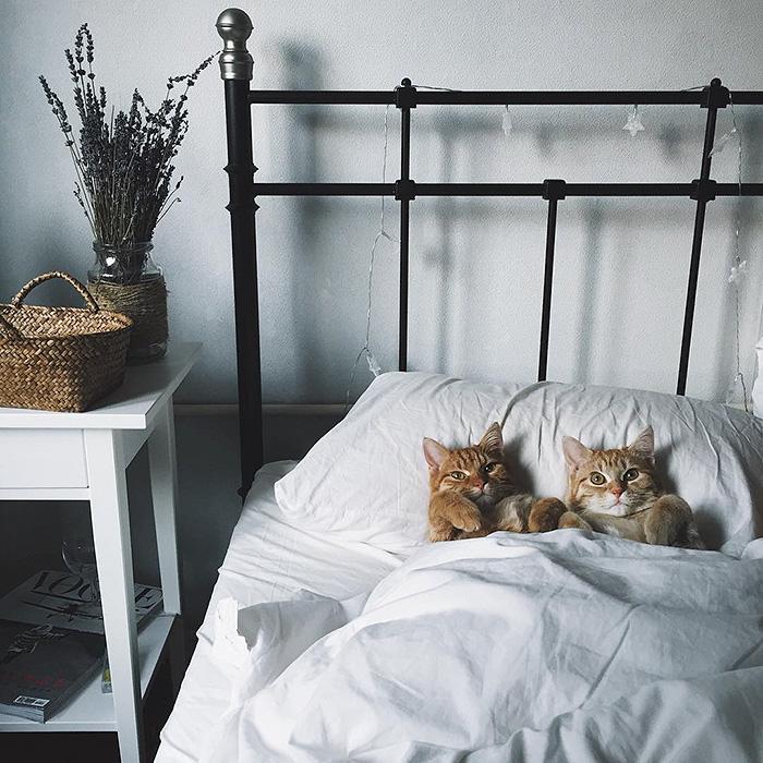 gatinhos-adotados-formam-dupla-inseparavel-anya-blog-usenatureza