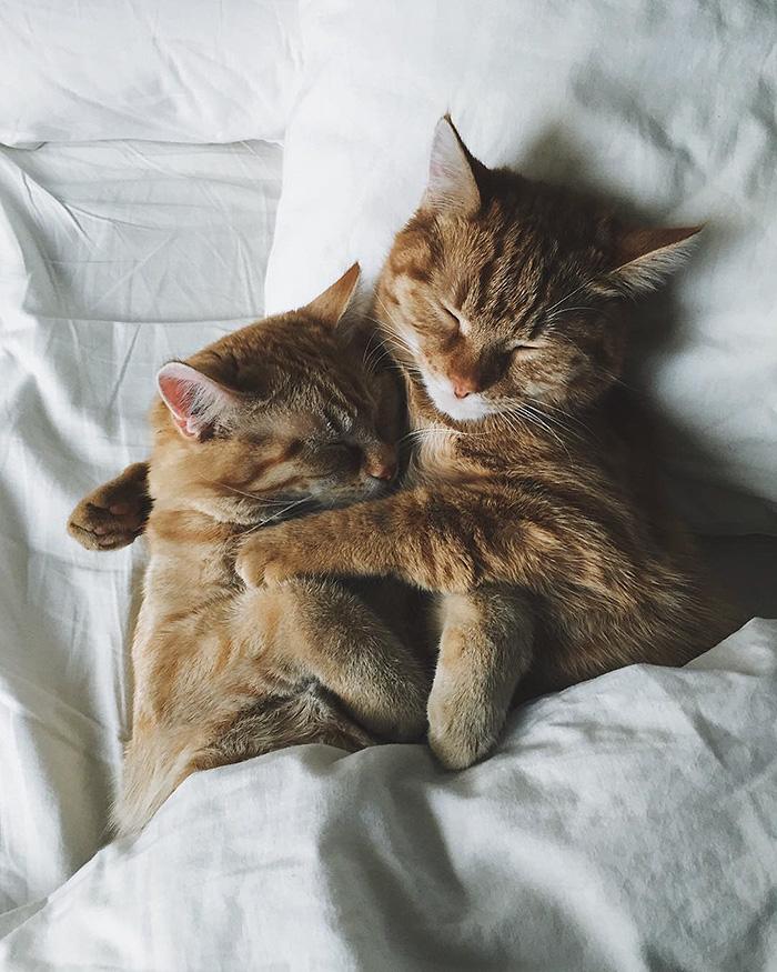 gatinhos-adotados-formam-dupla-inseparavel-blog-usenatureza