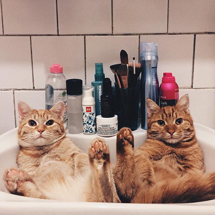 gatinhos-adotados-formam-dupla-inseparavel-moscou-blog-usenatureza