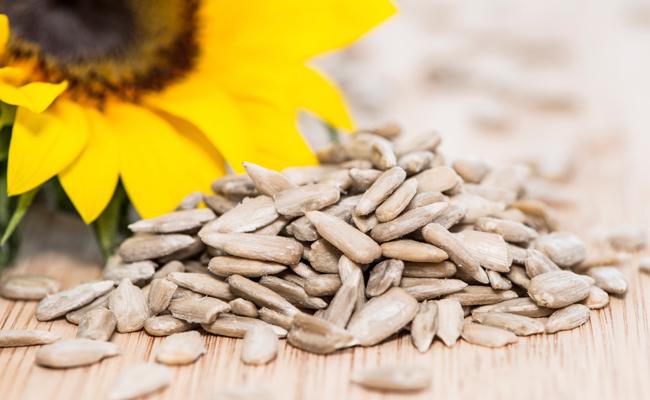 o-girassol-sementes-blog-usenatureza