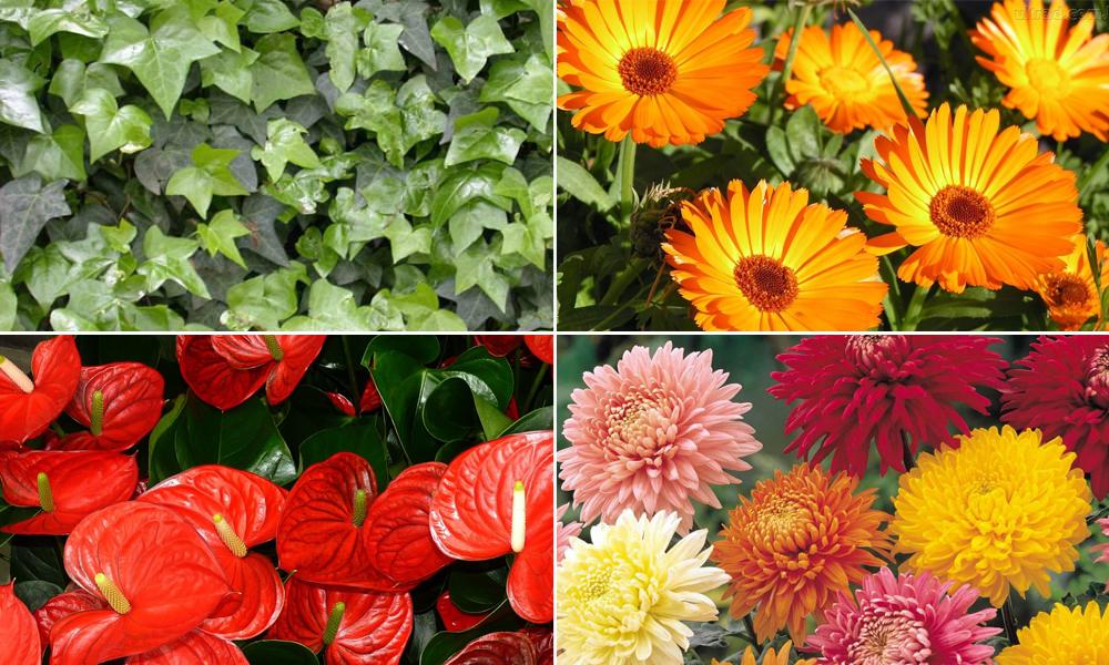 10-plantas-que-ajudam-a-melhorar-o-ar-em-casa-blog-usenatureza