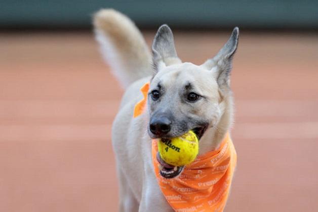 cachorros-sem-lar-viram-gandulas-no-open-de-tenis-blog-usenatureza