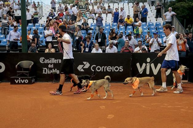 cachorros-sem-lar-viram-gandulas-no-open-de-tenis-sao-paulo-blog-usenatureza